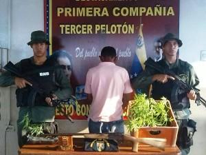mandos_Rurales_detienen_a_sujeto_con_21_matas_de_marihuana