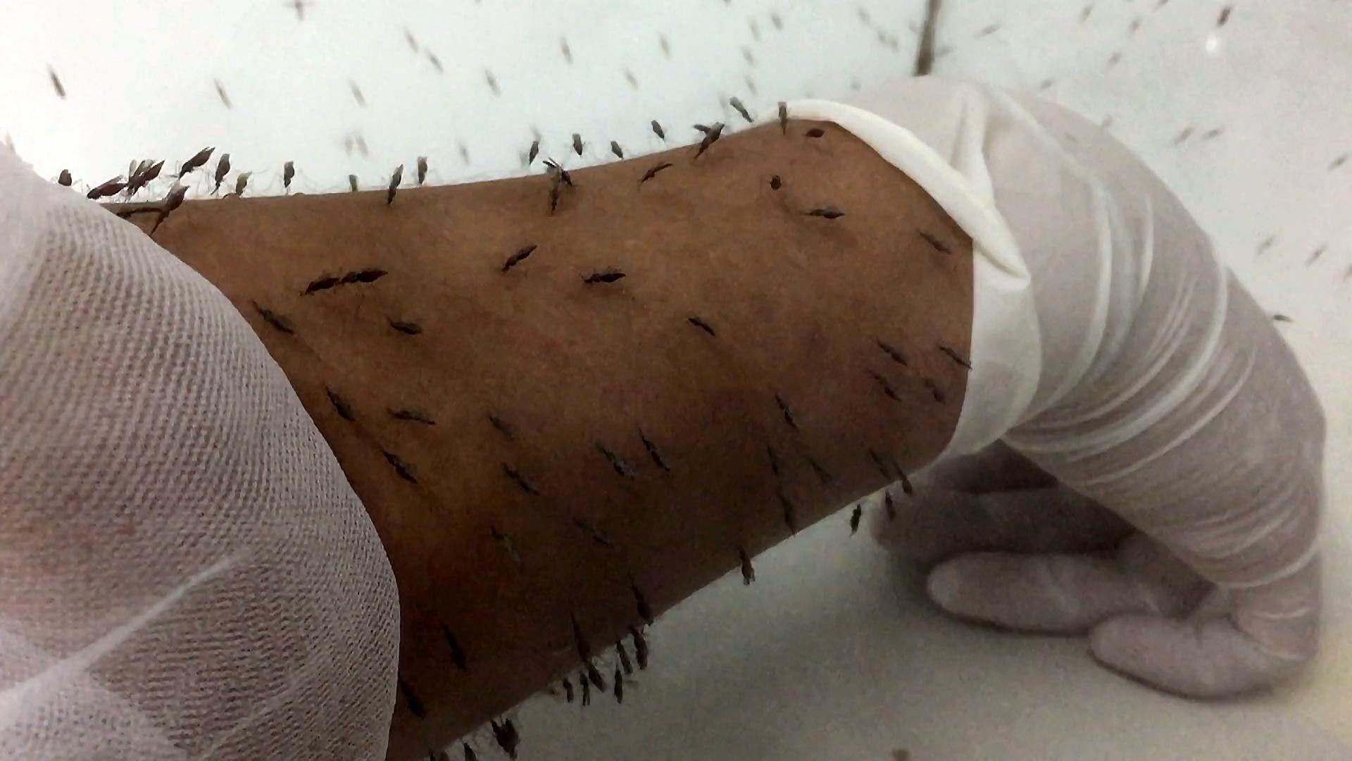 Los especialistas de la Red también mencionan que el brote de malaria ...
